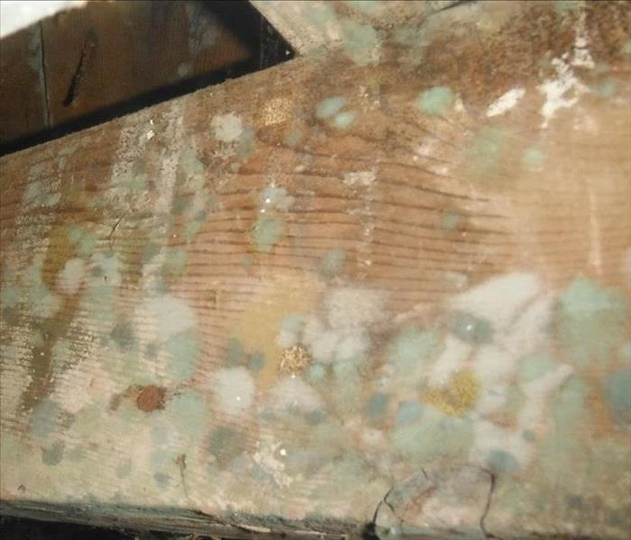Is mold lurking your West Covina home? Call SERVPRO