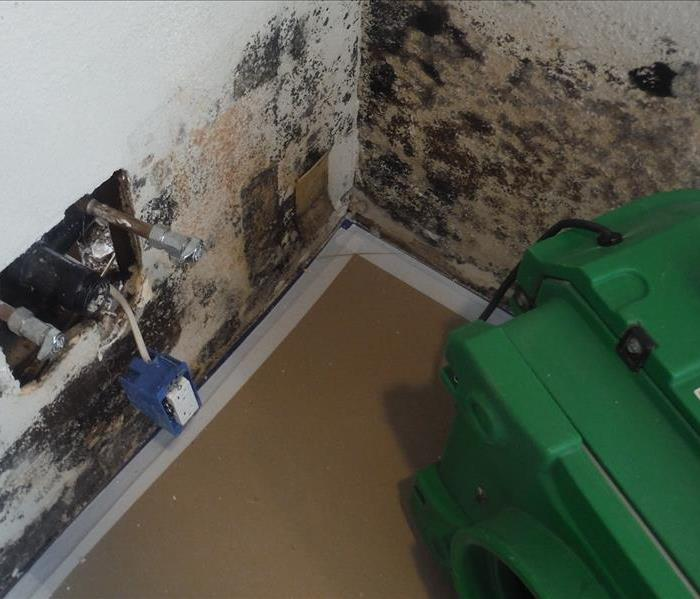 Mold Remediation Mold… Is It a DIY Project?