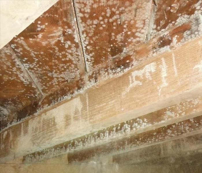 SERVPRO of West Covina inspects a Moldy Crawlspace | SERVPRO of West