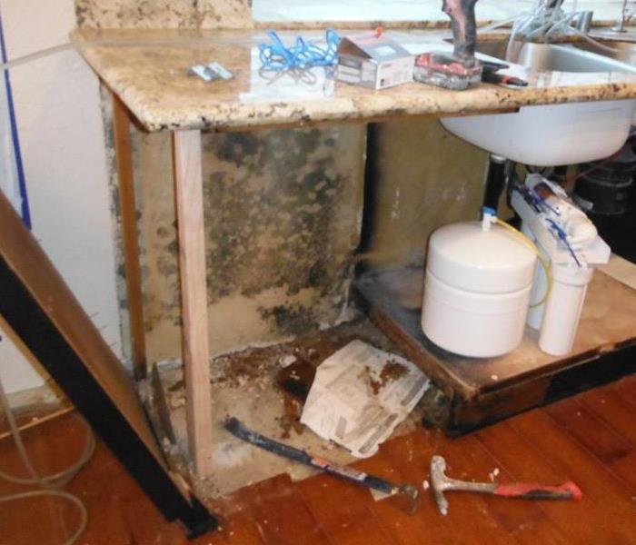 General What Everybody Should Know about Mold
