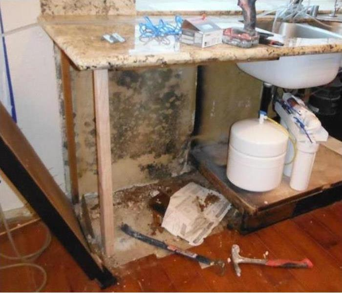 Mold Remediation Basics of what Everybody Should Know about Mold