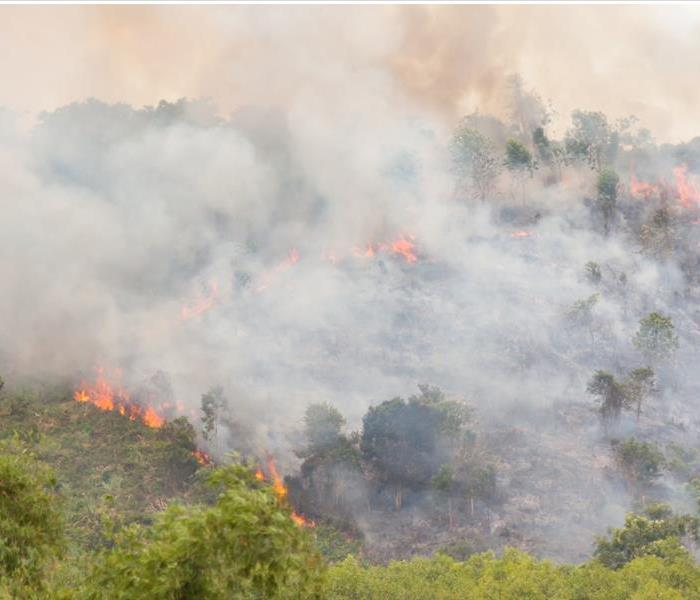 A California hillside with trees and greenery are on fire. Flames and smoke are active.